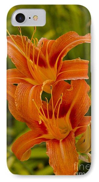 Twin Orange Trumpet Lilies IPhone Case by MaryJane Armstrong
