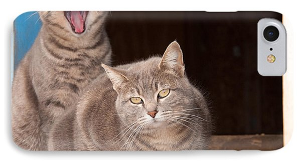 Twin Tabbies IPhone Case