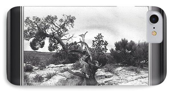 Twisted. Natures Prank IPhone Case by Catherine Swerediuk