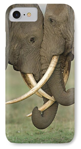 Two African Elephants Fighting IPhone Case by Panoramic Images