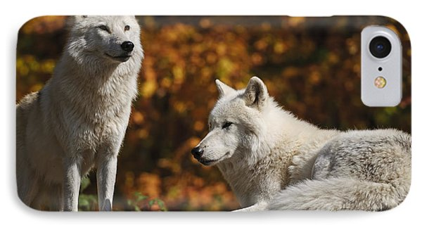 IPhone Case featuring the photograph Two Arctic Wolves On Rock Hill by Wolves Only