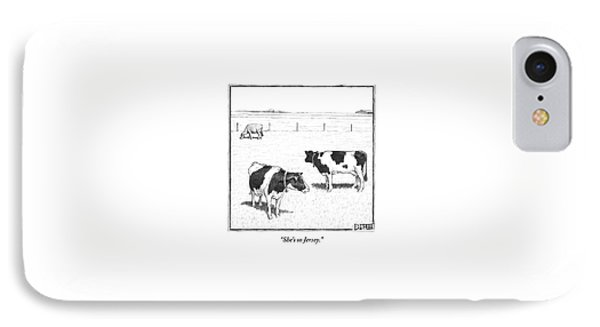 Two Spotted Cows Looking At A Jersey Cow IPhone 7 Case