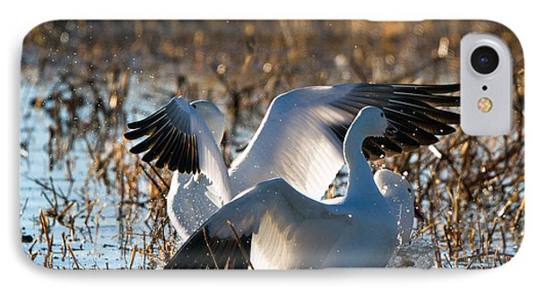 Two Backlit Snow Geese IPhone Case by Martha Marks