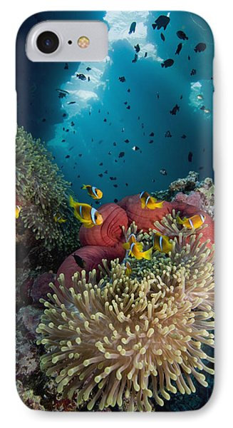 Two-banded Anemonefish And Bulb IPhone Case