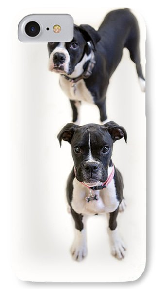 Two Boxers IPhone Case by Rebecca Cozart