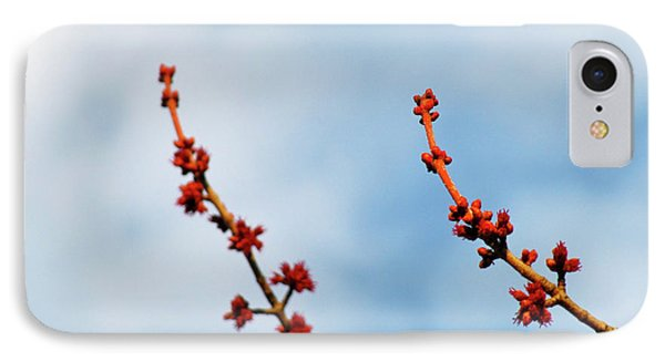 Two Budding Branches IPhone Case by CML Brown