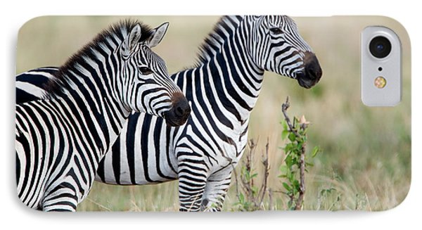 Two Burchells Zebras Equus Burchelli IPhone Case by Panoramic Images