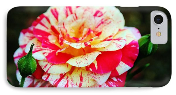 Two Colored Rose IPhone Case by Cynthia Guinn