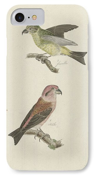 Two Crossbills, Possibly Christiaan Sepp IPhone Case by Quint Lox