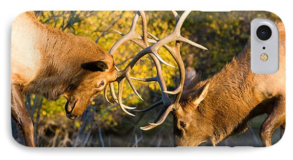Two Elk Bulls Sparring IPhone Case by James BO  Insogna