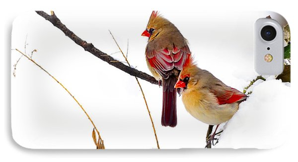 Two Females Posing As Cardinals Phone Case by Randall Branham