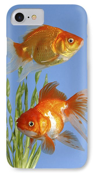 Two Fish Fs101 IPhone Case by Greg Cuddiford