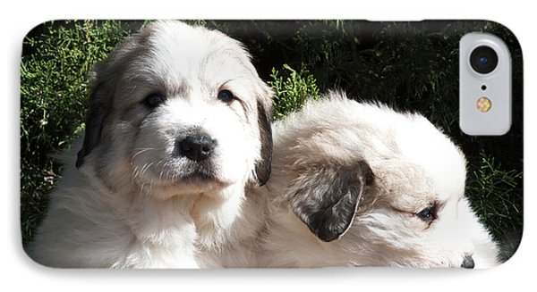 Two Great Pyrenees Puppies Sitting IPhone Case by Zandria Muench Beraldo