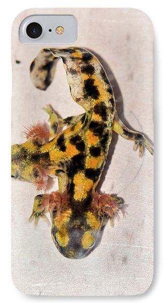 Salamanders iPhone 7 Case - Two-headed Fire Salamander by Photostock-israel