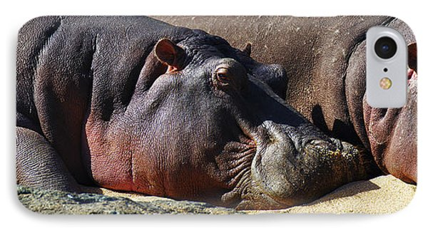 Two Hippos Sleeping On Riverbank IPhone Case by Johan Swanepoel