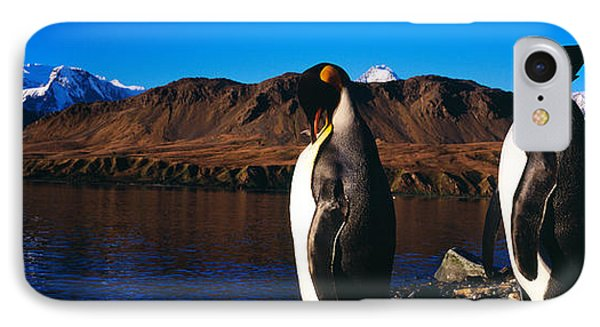 Two King Penguins Aptenodytes IPhone Case by Panoramic Images