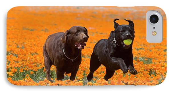 Two Labrador Retrievers Running IPhone Case