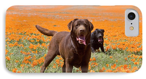 Two Labrador Retrievers Standing IPhone Case