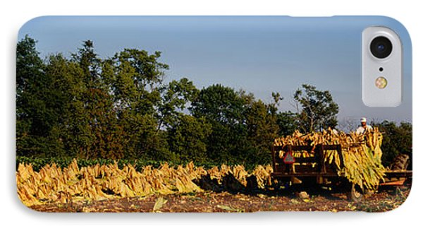 Two People Harvesting Tobacco IPhone Case by Panoramic Images