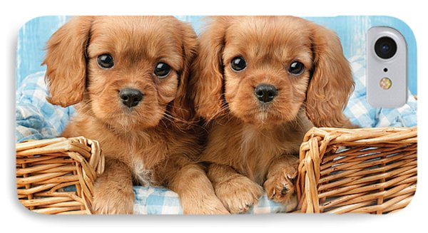Two Puppies In Woven Basket Dp709 IPhone Case by Greg Cuddiford