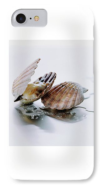 Two Scallops IPhone Case