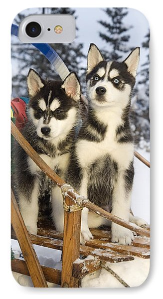 Two Siberian Husky Puppies Sitting In IPhone Case by Jeff Schultz