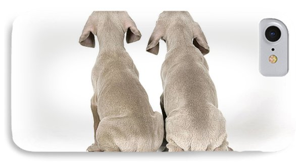 Two Weimaraner Puppies IPhone Case by John Daniels