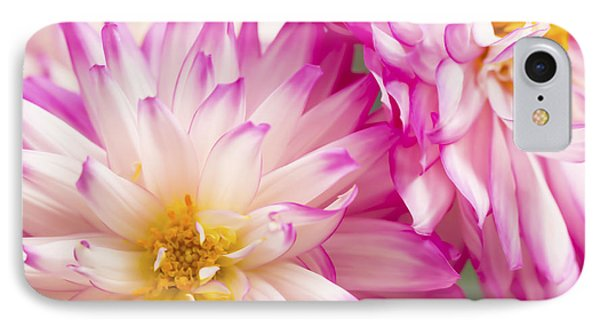 Two White And Pink Decorative Dahlias Phone Case by Daphne Sampson