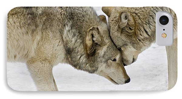 Two Wolves In  A Staredown IPhone Case by Gary Slawsky