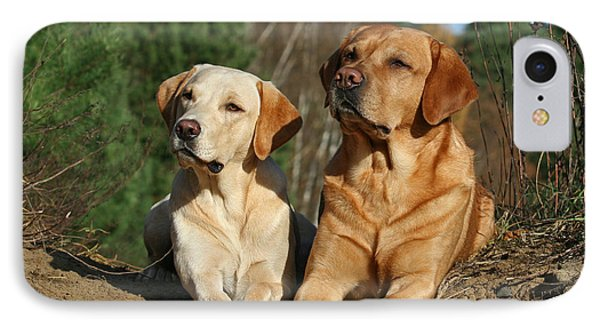 Two Yellow Labrador Retriever Dogs Lying In Sand IPhone Case by Dog Photos