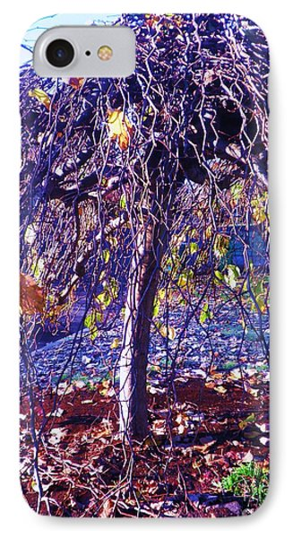Umbrella Tree In Fall IPhone Case by Suzanne McKay