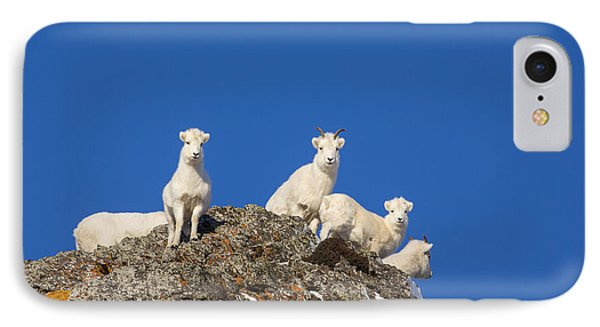 Sheep iPhone 7 Case - Under The Blues Skies Of Winter by Tim Grams