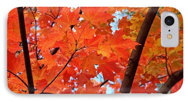 Under The Orange Maple Tree IPhone Case