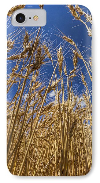 IPhone Case featuring the photograph Under The Wheat by Rob Graham