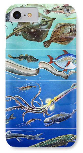 Underwater Creatures Montage IPhone Case by English School