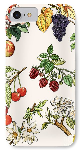 Unidentified Montage Of Fruit IPhone Case by English School
