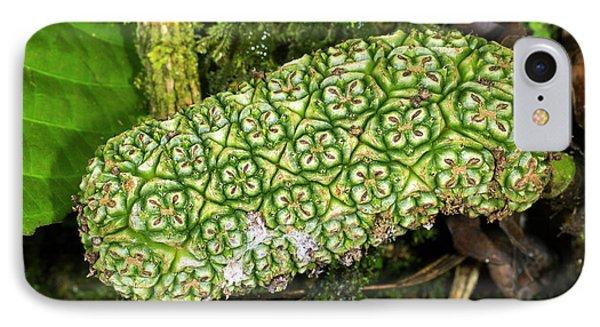 Unripe Anthurium Fruit IPhone Case by Dr Morley Read