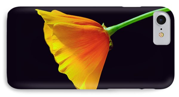 Mexican Gold Poppy IPhone Case