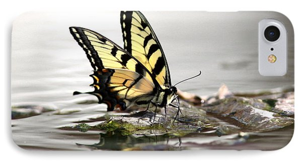 Unusual Setting For A Butterfly Water And Swallowtail