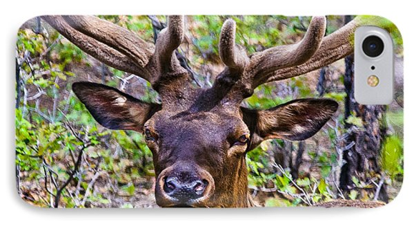 IPhone Case featuring the photograph Up Close And Personal With An Elk by Bob and Nadine Johnston