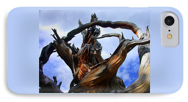 Uprooted Beauty IPhone Case by Shane Bechler