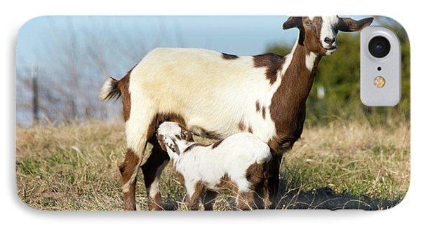 Us, Tn Domestic Goat Nurses Kid IPhone Case by Trish Drury