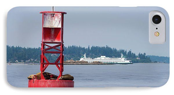 Us, Wa California Sea Lions (zalophus IPhone Case by Trish Drury