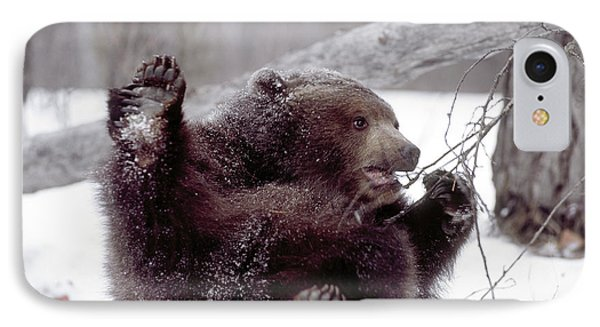 Usa, Alaska Juvenile Grizzly Plays IPhone Case by Jaynes Gallery