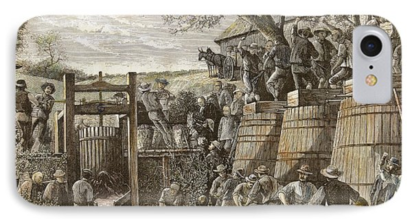 Usa. California. 19th Century. Chinese Workers Treading Grapes. Engraving IPhone Case by Bridgeman Images