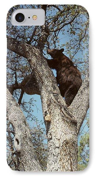 Usa, California, Black Bear In Oak IPhone Case by Gerry Reynolds