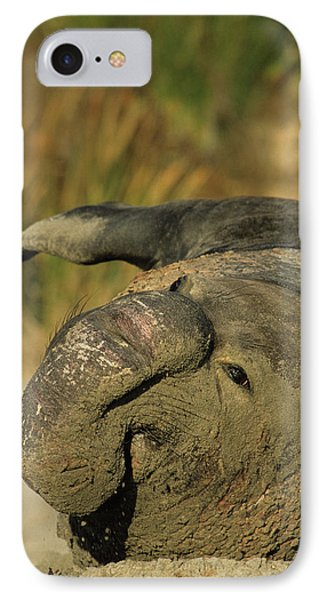 Usa, California, Northern Elephant IPhone Case by Gerry Reynolds