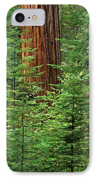 Usa, California, Yosemite National Park IPhone Case by Ann Collins