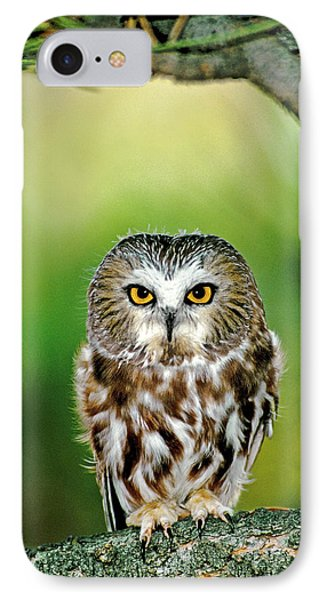 Usa, Colorado Close-up Of Northern IPhone Case by Jaynes Gallery