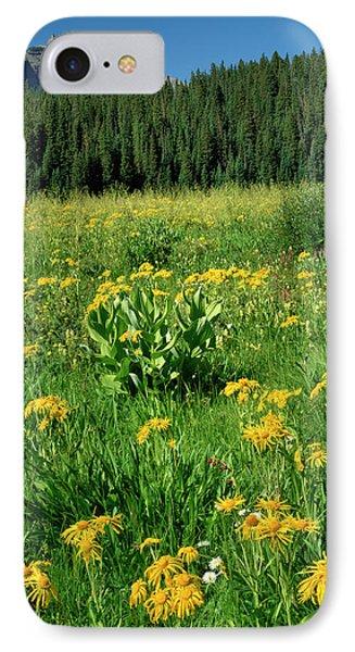 Usa, Colorado, West Elks Wilderness IPhone Case by Jaynes Gallery